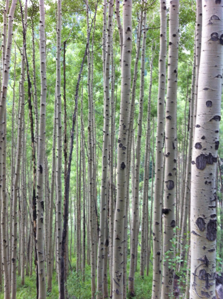 aspen trees, near aspen, hiking with kids, colorful colorado