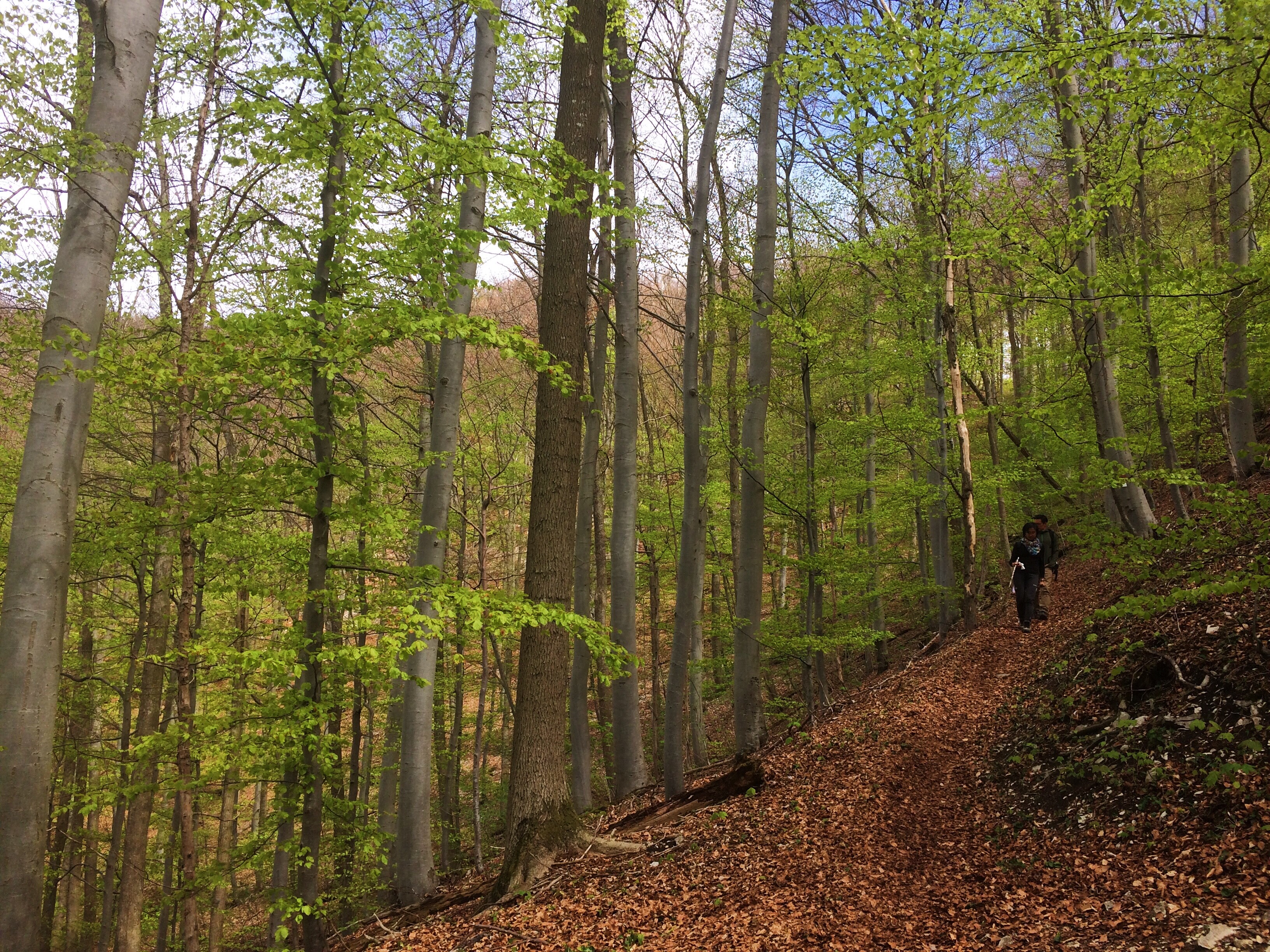 Bad Urach Hike, Creativity, Germany